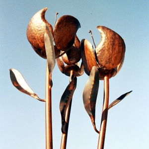 פרחים בכיכר נווה, ישראל פרימו