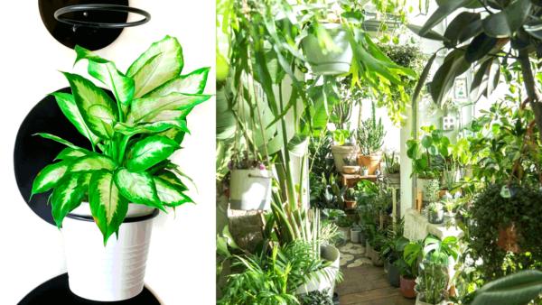 הטרנד שכבש את העולם מגיע לישראל: בתים ירוקים מלאים בצמחים חיים